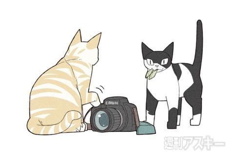 週アスCOMIC「我々は猫である」休載のお知らせ