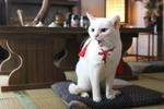2月22日のにゃんこの日までニコ生で連日8日間の猫だらけ配信で癒されよう
