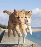ネコがジャンプする瞬間をとらえた写真集『飛び猫』が発売!躍動的ニャン
