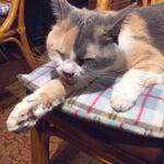 ネコの日なのでネコ空間でお酒を飲める猫居酒屋に行ってきた!