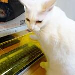 """透明キーボードデスクでお猫さまの""""かまって攻撃""""をドヤ顔で阻止すべし"""