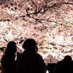 花見で役立つ、モテる!イケてる男の花見Tipsで桜を120%楽しむ