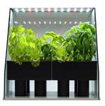 野菜やハーブを部屋で育てるオシャレな水耕栽培キット『ピッコラ』で野菜不足を解消!