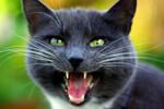 """「猫の鳴き声で音源作りなおせ?マジかよ!」人気ラッパーEl-P """"Meow the Jewels"""""""