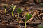 スタートアップ企業の成長の助けとなる4つのツール