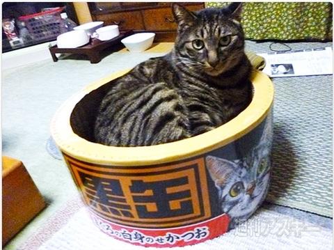よう 猫 で ある 猫 に が
