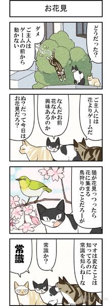 週アスCOMIC「我々は猫である」第52回