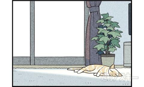 週アスCOMIC「我々は猫である」単行本、10月27日発売!