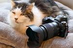 ニコンのミラーレス「Z 6/7」に猫認識AFがついたから、今日はニャンコ記念日