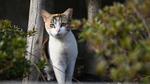 猫瞳AFを搭載した「ニコン Z 6」の実力を外猫で検証!