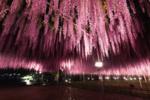 桜や星天など日本や世界の絶景に癒される臨場感たっぷりのVR動画