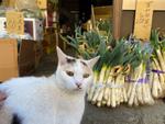 猫散歩ができないときは猫写真を整理するチャンス!【上州猫編】