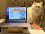 ネコと在宅ワークを両立する方法