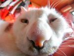 サンヨーの「DSC-MZ2」も! 2002年の飼い猫撮影の楽しさを振り返る