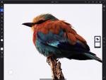 アドビ、Photoshop iPad版とFrescoプレミアム版 月額1078円で提供