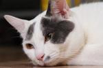 赤外線モードが便利なソニー「Cyber-shot F717」で撮った2003年の家猫たち