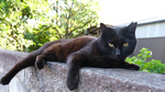 GWに発売されたばかりの富士フイルム「X-T4」で黒猫を撮る