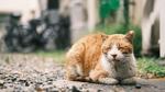 富士フイルム「X-T4」のクラシックネガで猫を撮ったら味がありすぎた