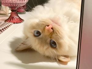 ネコも、デジタルガジェット好き