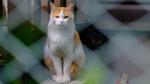 街の隙間から顔を出す猫を前ボケを入れて撮るテクニック