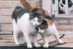 富士フイルム「X-T4」に70年代の望遠レンズを付けて早朝猫を撮る!