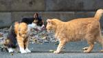 オリンパス応援企画! オリンパスのカメラで撮った猫たち