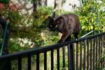 オリンパス「E-M1 Mark II」で撮った梅雨猫を振り返る