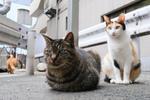梅雨の合間に富士フイルム「X-T4」のクラシックネガで猫を撮る
