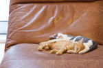 元気な子猫たちを富士フイルムとオリンパスのデジタル一眼カメラで激写!