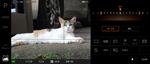 最強の猫撮りスマホ「Xperia 1 II」は夏バテ猫もしっかり撮影!