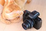 パナソニックの「LUMIX G100」は猫Vloggerにピッタリのカメラ