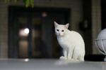 オリンパス「E-M1 Mark II」とともに夜猫を求めて1万歩