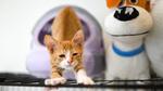 猫瞳AF搭載のニコン「Z 5」は子猫の瞳もバッチリ認識する