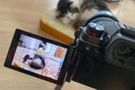 パナソニック「LUMIX DC-S5」は小型軽量化と低価格化で猫認識カメラのコスパモデル