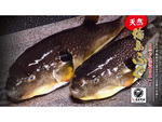 名代富士そば、圧倒的コスパの「天然輪島ふぐ唐揚げ丼セット」