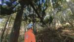 VR活用した林業向け教材視聴レポート、11K映像で撮影した倒れる木の恐ろしさ