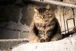 オリンパス「OM-D E-M1 Mark III」に100-400mmのレンズをつけて猫を撮る