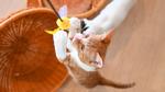 カメラ新製品の季節が来た! ニコン「Z 6II」で猫AFの実力をテスト!