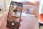 買ったばかりのiPhone 12 Pro Maxで子猫と戯れる!