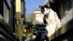 富士フイルムのミラーレス「X-S10」は猫認識AFが搭載されれば完璧!