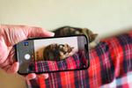iPhone 12 Pro Maxの望遠は猫に警戒されずに撮影するときに便利