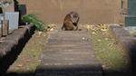 キヤノンの望遠専用カメラ「Powershot Zoom」で猫に気付かれずに写真を撮る!