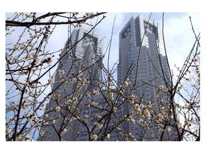 【連載】超高層ビルを背景とした梅は新宿中央公園だけ!