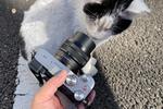 ソニー「α7C」とシグマのレンズで猫を撮ったら相性良すぎで驚いた!