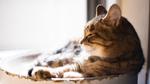 外出する代わりにレンズを買って室内で飼い猫を撮ろう!