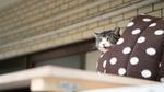 シグマの手ごろな単焦点レンズとソニー「α7C」の組み合わせは猫撮影がはかどる