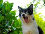 700回記念! 連載初期の猫とカメラで昔を懐かしむ