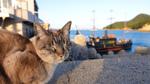 西日本の旅先で出会った猫を撮影したカメラで振り返る