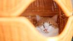 富士フイルム「GFX100S」で撮った猫写真が超美麗で衝撃を受けた