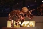 トリケラトプスの実物全身骨格がくるぞ!! 「DinoScience 恐竜科学博」、パシフィコ横浜で7月17日より開催